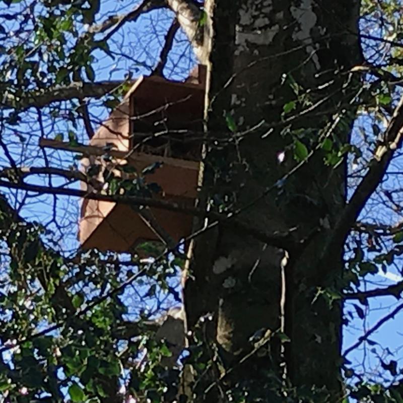kestrel box mounted at Spreacombe