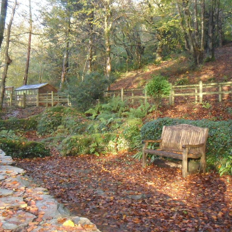 RSPB Chapel Wood, showing bench and chapel in Autumn