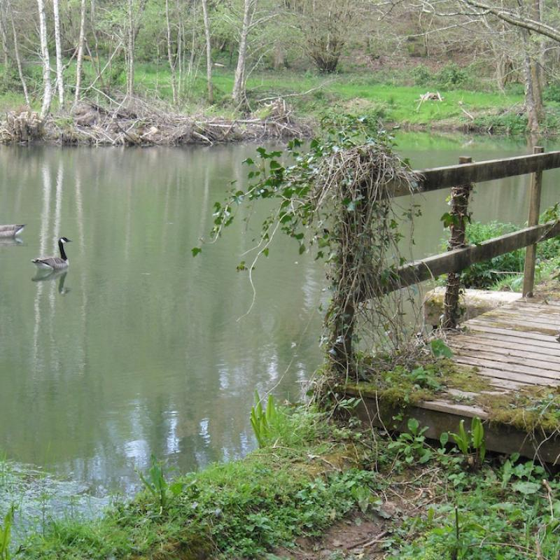 Pond, bridge and geese at Spreacombe