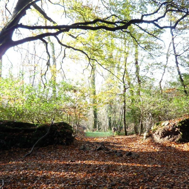 Autumnal woodland walk at Spreacombe